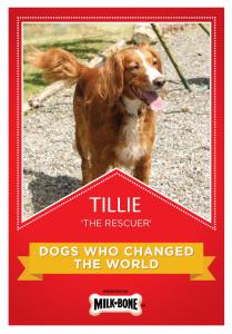 Tillie_1